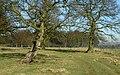 Lady Spencer's Walk - geograph.org.uk - 803627.jpg