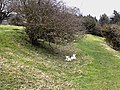 Lambs in Felton Park - geograph.org.uk - 1802086.jpg