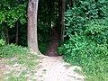 Landschaftsschutzgebiet Wäldchen bei Buer Melle Datei 45.jpg