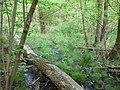 Langenfeld Nähe Haus Graven 0019.jpg