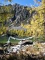 Larix potaninii prayerflags Huluhai.jpg