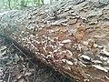 Las Mieszany na Morenie natural reserve (2).jpg