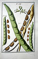 LeBerryais Haricots planche 12.jpg