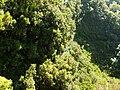 Levada 25 Fontes, Madeira, Portugal, June-July 2011 - panoramio (13).jpg