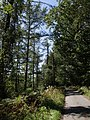 Lewer Bottom Wood - geograph.org.uk - 536366.jpg