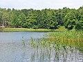 Lienewitz - Kleiner Lienewitzsee (Little Lienewitz Lake) - geo.hlipp.de - 39304.jpg