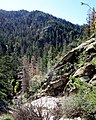 Lincoln National Forest 4.jpg