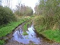 Line of old railway track, Donaghanie - geograph.org.uk - 1518232.jpg