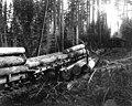 Loading logs at Camp 1, McDougal and Biladeau Logging Co, Ravensdale (CURTIS 993).jpeg