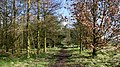 Locko Plantation - geograph.org.uk - 361523.jpg