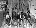 Loggers with felling axes and crosscut saw sitting in undercut of large redcedar, Sultan, Washington, nd (INDOCC 476).jpg