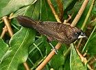 Фото толстоклювой коричневой птицы в растительности