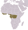 Long-tailed Pangolin area.png