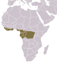 Long-tailed Pangolin area.png