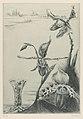 Louise Danse - Iris - Graphic work - Royal Library of Belgium - S.II 125320.jpg