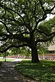 Louisiana State University, Baton Rouge, Louisana - panoramio (54).jpg