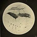 Lowell - Mars (1894) - Plate 9.jpg
