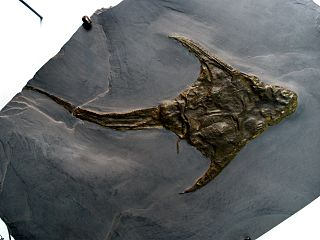 <i>Lunaspis</i> genus of fishes (fossil)