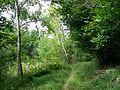 Chemin au marais de Stors