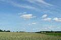 MOs810 WG 2015 22 (Notecka III) (okolice Roska) (3).JPG