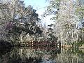 Magnolia Plantation and Gardens - Charleston, South Carolina (8556501444).jpg