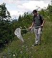 Man using Butterfly Net, Mt Baker Snoqualmie National Forest (32112077165).jpg