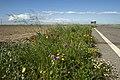 Manfredonia, Province of Foggia, Italy - panoramio - trolvag (12).jpg