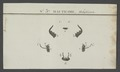 Mantichora - Print - Iconographia Zoologica - Special Collections University of Amsterdam - UBAINV0274 009 01 01 0003.tif