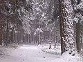 March in Jurmala - panoramio - Paul Berzinn (1).jpg