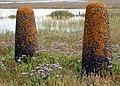 Marshes of Southampton Water - geograph.org.uk - 647496.jpg