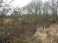 Middlebere, carr - geograph.org.uk - 1201916.jpg
