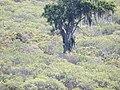 Mirangaba - State of Bahia, Brazil - panoramio (2).jpg