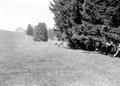 Mitrailleure beim Stellungsbezug am Waldrand - CH-BAR - 3241247.tif