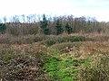 Moat Wood - geograph.org.uk - 323294.jpg