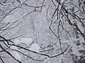 Mokane, MO 65059, USA - panoramio (2).jpg