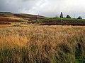 Moorland near Stroanpatrick - geograph.org.uk - 267191.jpg