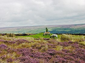 Image illustrative de l'article Parc national des North York Moors