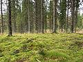 Moss on forest.jpg