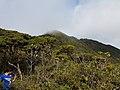 Mt Hamiguitan Summit Trail.jpg