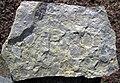 Mudchip breccia (Vinton Member, Logan Formation, Lower Mississippian; Mohawk Dam roadcut, northwest of Nellie, Ohio, USA) 1 (32332682164).jpg