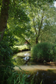 Muecke Ilsdorf River Meadow Ilsbach Ilsdorf E.png