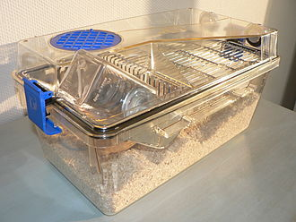 House mouse - An individually ventilated and sealed cage for laboratory mice