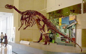 Skelettrekonstruktion von Muttaburrasaurus im Queensland Museum in Australien