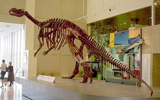 Muttaburrasaurus - Reconstructed skeleton at the Queensland Museum