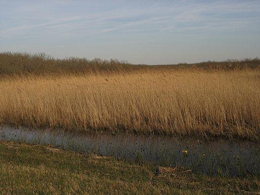 NLD-Nederlands-Mar Zwanenwater08