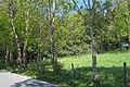 Nachrodt-Wiblingwerde-NaturdenkmalHülsenbusch-1-Asio.JPG