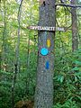 Narragansett Trail - intersection with Tippecansett Trail at the Connecticut-Rhode Island state border.jpg