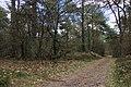 Nationaal Park Drents-Friese Wold. Locatie Dieverzand 007.JPG
