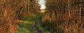 Nationaal Park Weerribben-Wieden. Doorkijkje vanaf pad door het laagveenmoeras 02.jpg