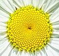 Nature's Fractals (39202889194).jpg